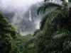 Гондурас. Национальный парк Пико-Бонито