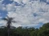 Парагвай. Национальный парк Ибике (3)