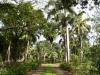 Сады Терстона (Thurston Gardens) 3
