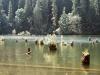 Румыния. Красное озеро (2)