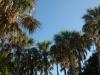 Тунис. Таузар. Музей финиковой пальмы (1)