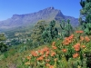 ЮАР. Национальный парк Столовая гора (1)