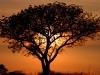 ЮАР. Заповедник Мадикве-Гейм (2)