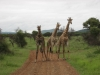 ЮАР. Заповедник Мадикве-Гейм (3)