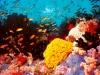 Большой барьерный риф (2)