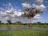 Ботсвана. Национальный парк Чобе -3