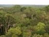 Бразилия. Дождевые леса Амазонки -1