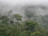 Бразилия. Дождевые леса Амазонки -3