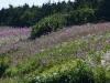 Канада. Национальный парк Грос-Морн (3)