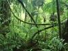 Коста-Рика. Национальный парк Корковадо -2