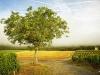 A walk through the vineyard