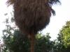 Египет. Асуан. Остров Китченера. Ботанический сад (1)