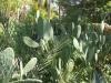 Египет. Асуан. Остров Китченера. Ботанический сад (3)