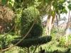 Египет. Асуан. Остров Китченера. Ботанический сад (4)