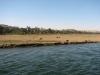 Египет. Берега Нила (5)
