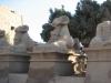Египет. Карнакский храм. Дромос с бараноголовыми сфинксами