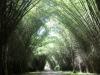 Гондурас. Ботанический сад Лансетилла (2)