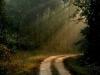 Индия. Национальный парк Бандхавгарх (1)