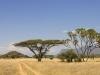 Кения. Национальный заповедник Самбуру (1)