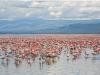 Кения. Озеро Накуру (2)