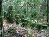 Мадагаскар. Национальный парк Раномафана (2)