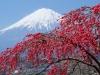 Япония. Гора Фудзияма (3)