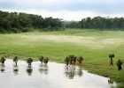 Национальный парк Читван