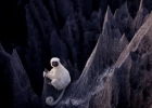 Лемур Заповедник Каменный лес Мадагаскар