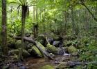 Мадагаскар. Национальный парк Андасибе-Мантадия (1)